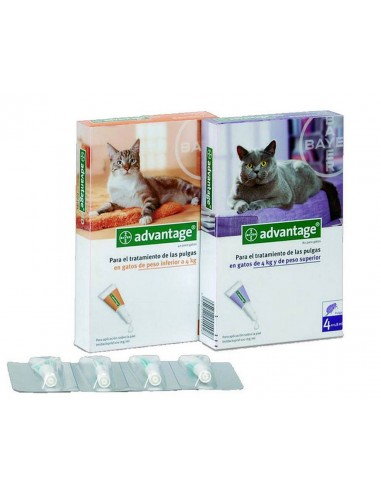 Advantage Gatos Antiparasitario Externo