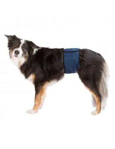 Banda de abdomen para perro macho